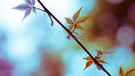 leaf, branch, bright