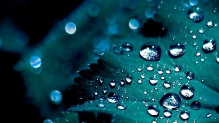 leaf, drop, droplets