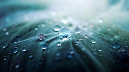 leaf, drop, macro
