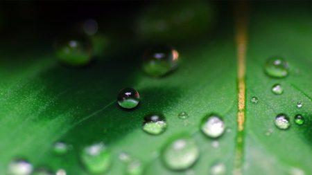 leaf, drop, plant