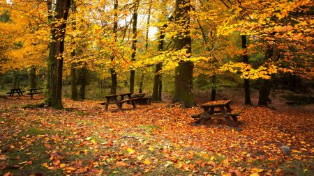 leaf fall, autumn, benches