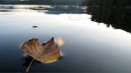 leaf, fall, dried