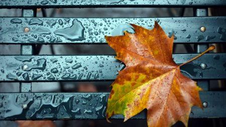 leaf, fall, drop