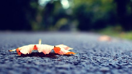 leaf, fall, fallen