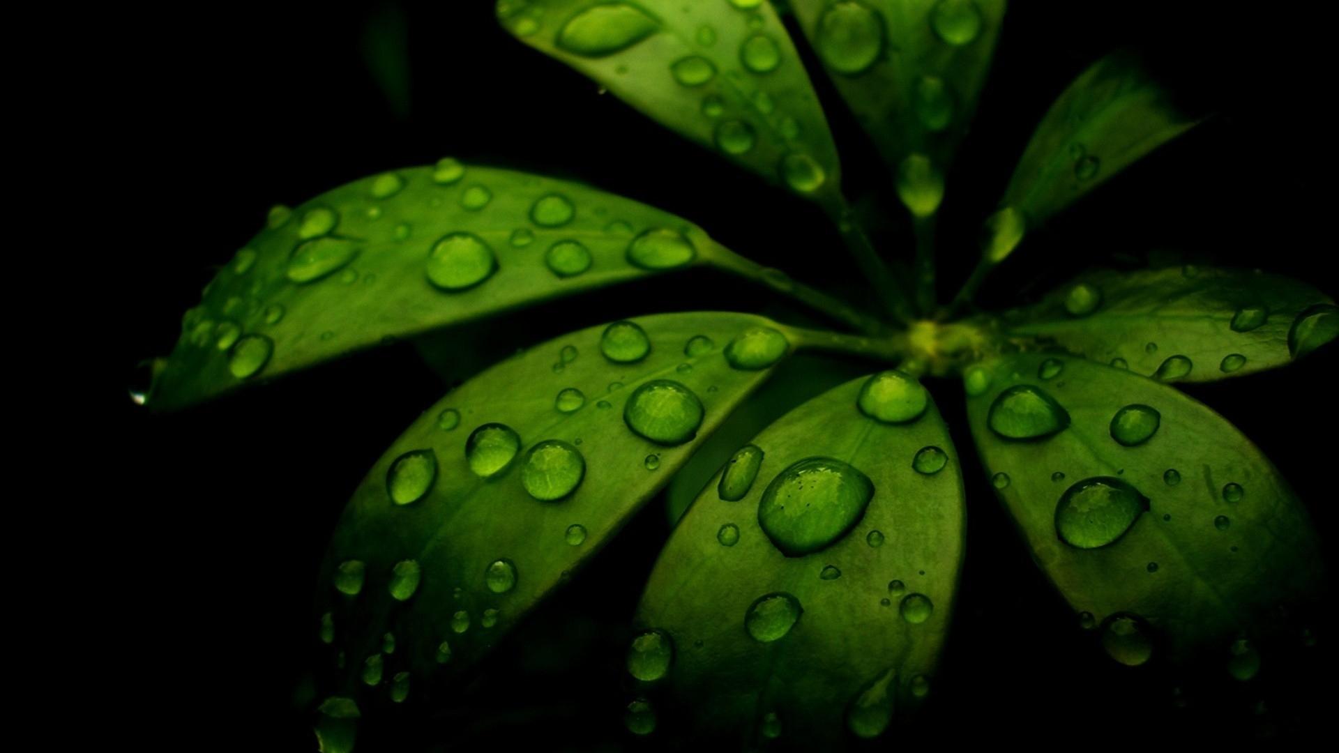 Download Wallpaper 1920x1080 Leaf Green Black Carved Full Hd 1080p Hd Background