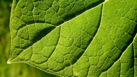leaf, green, form