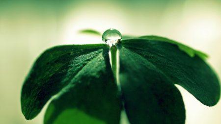 leaf, green, straw