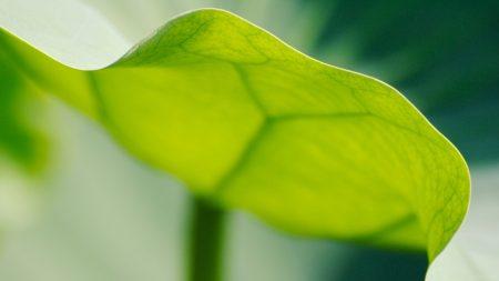 leaf, light, surface