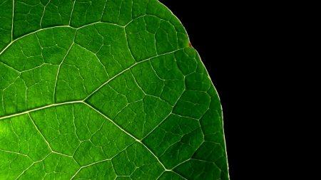 leaf, lines, black background
