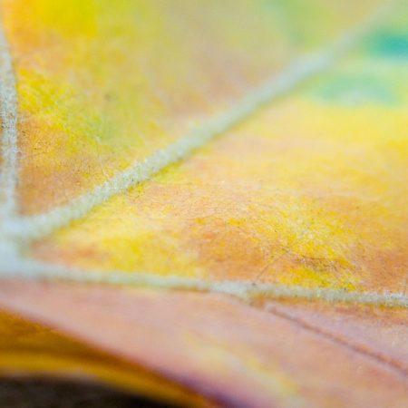 leaf, maple, light