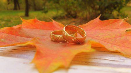 leaf, maple, rings