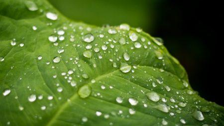 leaf, plant, drops