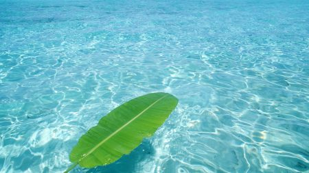 leaf, water, azure