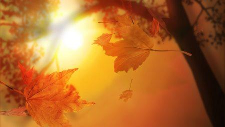 leaves, autumn, flight