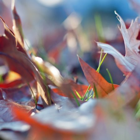 leaves, autumn, grass