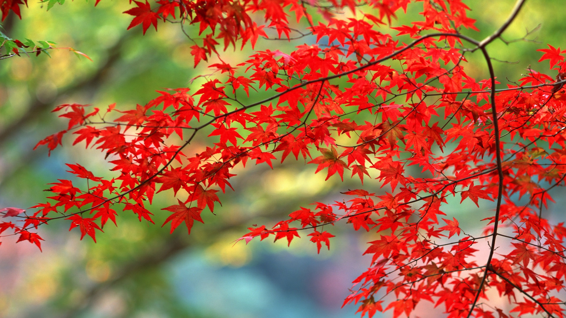 Download Wallpaper 1920x1080 leaves, autumn, nature
