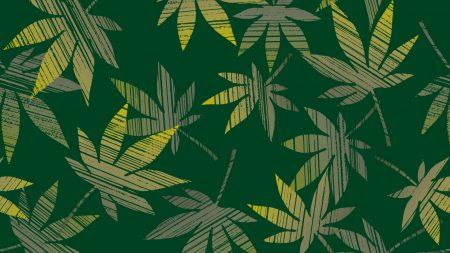 leaves, cannabis, plants