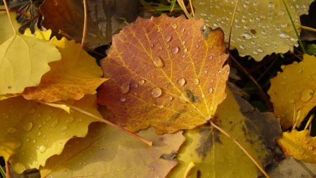 leaves, drops, dew