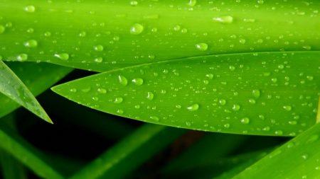 leaves, drops, green