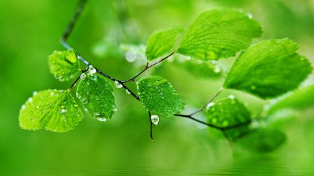 leaves, drops, nature