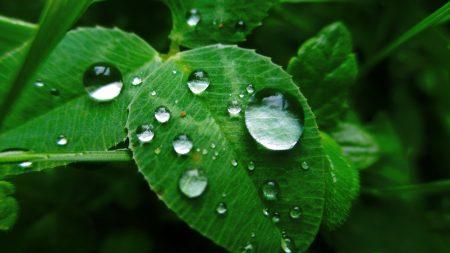 leaves, grass, dew