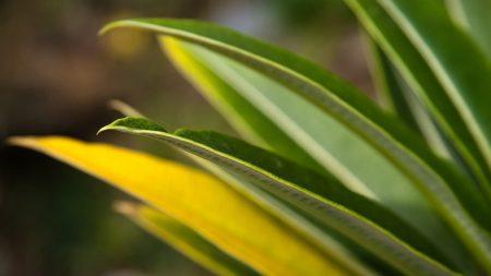 leaves, grass, light