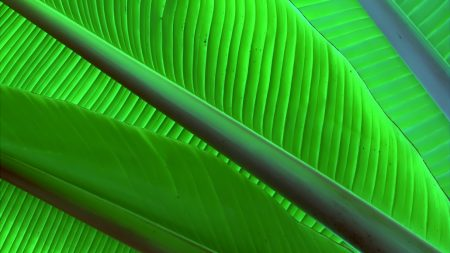 leaves, green, bright