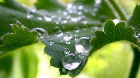 leaves, green, drops
