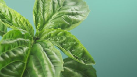 leaves, green, leaf