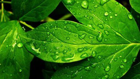 leaves, green, wet