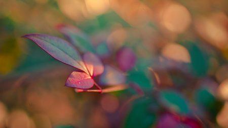 leaves, light, glare
