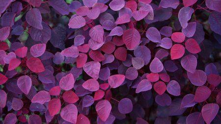 leaves, light, shape
