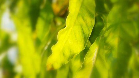 leaves, light, strips