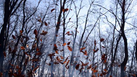 leaves, lots, fog