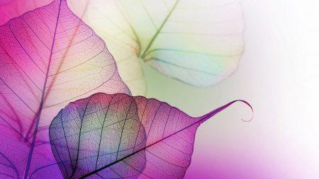 leaves, mauve, purple
