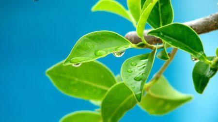 leaves, moisture, tree