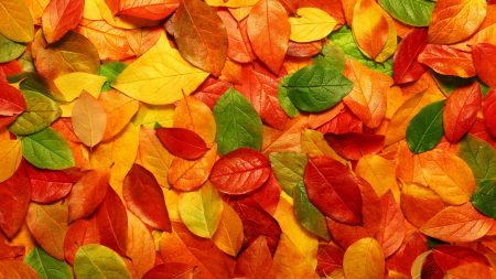 leaves, orange, autumn
