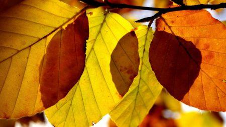 leaves, shape, autumn