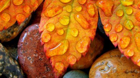 leaves, stones, moisture