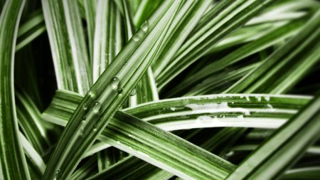 leaves, striped, wet