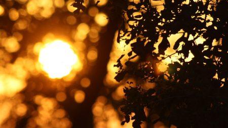 leaves, sun, disk