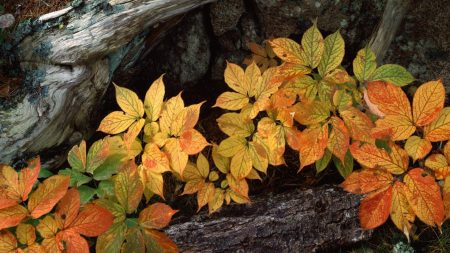 leaves, tree, underbrush