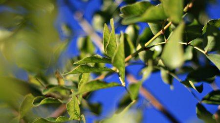 leaves, twigs, green