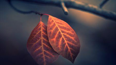 leaves, twigs, plant