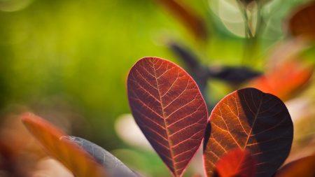 leaves, twigs, steam