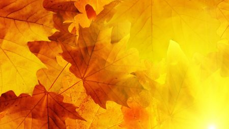 leaves, veins, autumn