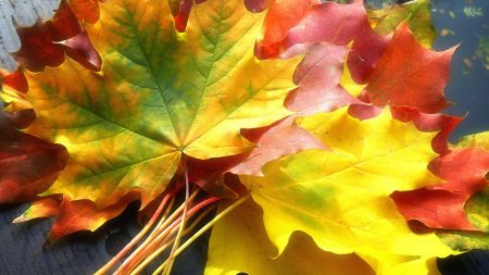 leaves, yellow, autumn