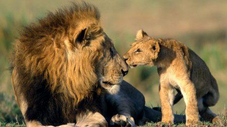 leon, father, lion