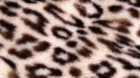 leopard, background, texture
