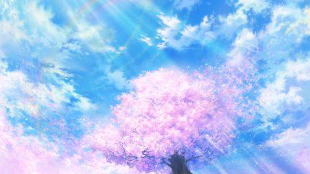 light, cherry, tree